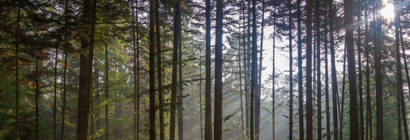 Arbre, bois, forêt et sociétés